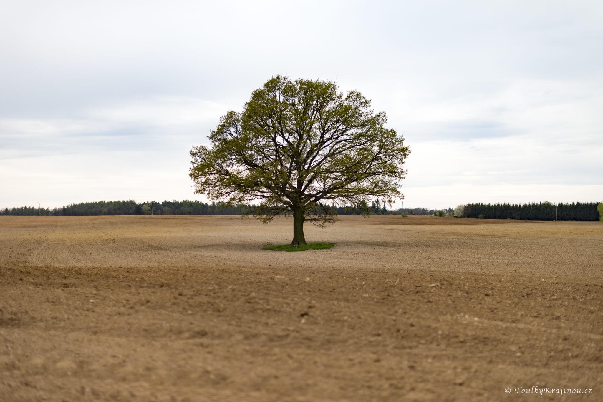 Okruh přírodním parkem Modřanská rokle – Cholupice
