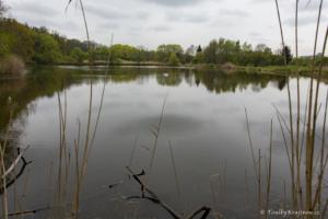 Jeden z rybníků