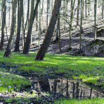 Zelený život u potoka
