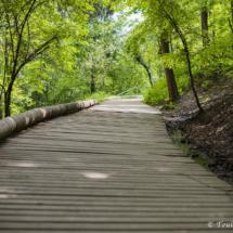 Dřevěná cestička