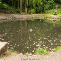 Rybníček Pod Dianou