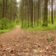Jedna z lesních cest