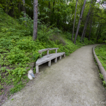 Zpevněná cesta s lavičkou